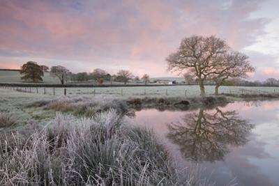 Frosty Conditions at Dawn Beside a Pond in the Countryside, Morchard Road, Devon, England. Winter by Adam Burton
