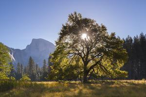 Half Dome and Elm Tree in Cooks Meadow, Yosemite Valley, California, USA. Autumn (October) by Adam Burton