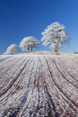 Hoar Frosted Farmland and Trees, Bow, Mid Devon, England. Winter by Adam Burton