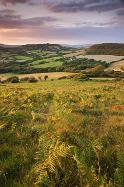 Rolling Dorset Countryside Viewed from Golden Cap, Dorset, England. Summer by Adam Burton