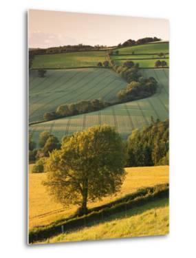 Rolling Farmland in Summertime, Devon, England. Summer by Adam Burton