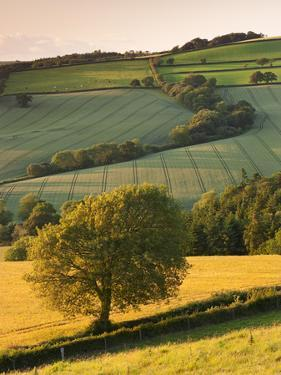 Rolling Farmland in Summertime, Devon, England. Summer by Adam Burton