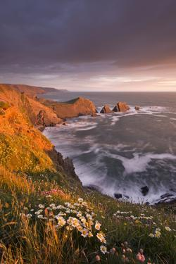 Wildflowers Growing on the Cliff Tops Above Hartland Point, Looking South to Screda Point, Devon by Adam Burton