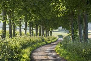 Winding Tree Lined Country Lane, Dorset, England. Summer (July) by Adam Burton