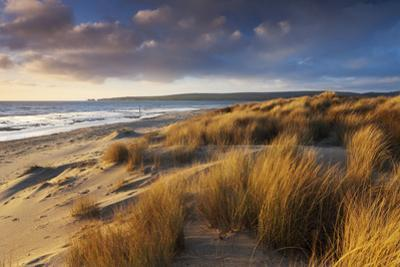 Windswept Sand Dunes on the Beach at Studland Bay, with Views Towards Old Harry Rocks, Dorset by Adam Burton
