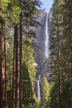 Yosemite Falls through the conifer woodlands of Yosemite Valley, California, USA. Spring (June) 201 by Adam Burton