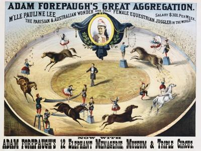 Adam Forepaugh's Great Aggregation Poster