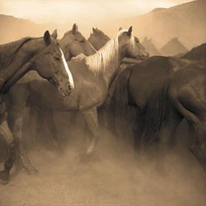 Remuda, Spanish Ranch by Adam Jahiel