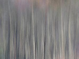 Abstract Tree Pattern, Great Smoky Mountains National Park, North Carolina, Usa by Adam Jones
