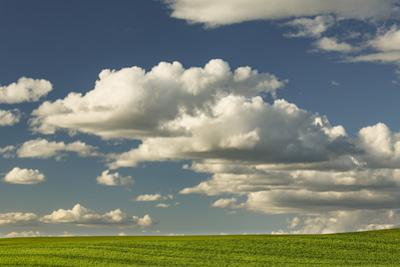 Afternoon clouds above rolling hills of wheat, Palouse region of Eastern Washington State. by Adam Jones