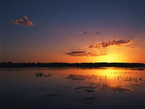 Birds in Water at Sunset, J.N. Ding Darling National Wildlife Refuge, Florida, USA by Adam Jones