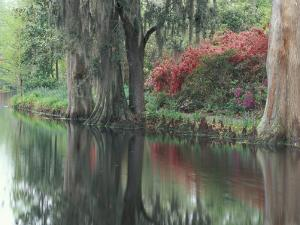 Charleston, South Carolina, USA by Adam Jones