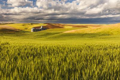 Contoured rolling hills of wheat and grain silos, Palouse region of Eastern Washington State. by Adam Jones