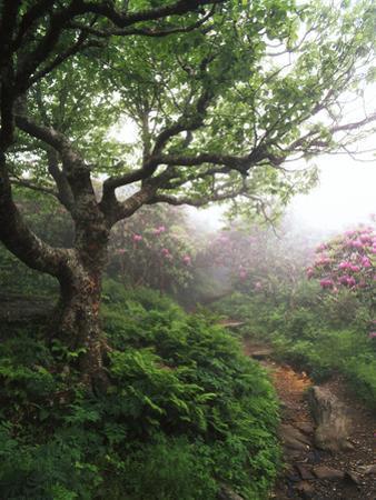 Craggy Gardens, Pisgah National Forest, North Carolina, USA by Adam Jones