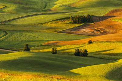 Expansive view of rolling hills of wheat crops at sunrise, from Steptoe Butte, Palouse region of Ea by Adam Jones