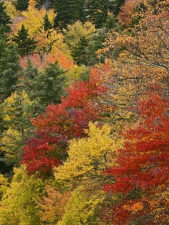 Fall Colors in the Southern Appalachian Mountains, North Carolina, USA by Adam Jones