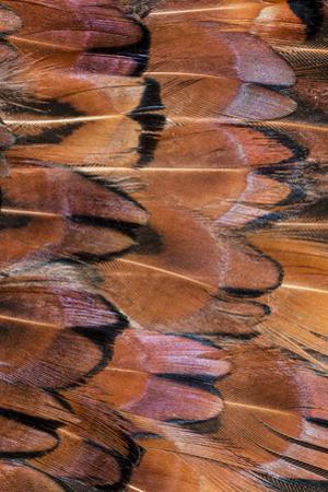 Feather pattern. Colorful feather pattern. by Adam Jones
