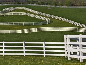 Fence Winding Across Calumet Horse Farm, Lexington, Kentucky, USA by Adam Jones