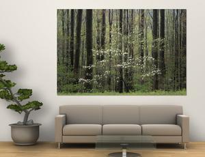 Flowering Dogwood Tree, Great Smoky Mountains National Park, Tennessee, USA by Adam Jones