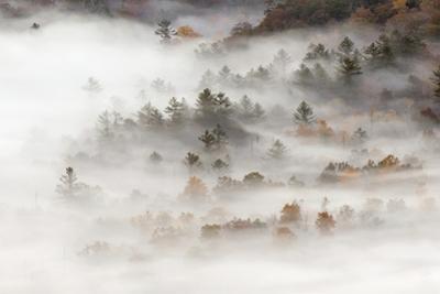 Fog filled valley at sunrise, Blue Ridge Parkway, Brevard, North Carolina by Adam Jones