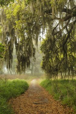 Footpath beneath live oaks draped in Spanish moss at sunrise, Circle B Bar Reserve, Polk County, ne by Adam Jones
