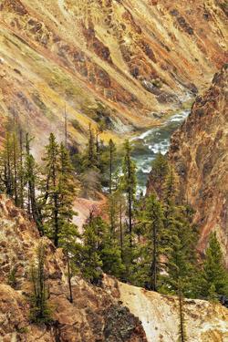 Grand Canyon of Yellowstone, Yellowstone National Park, Montana, Wyoming by Adam Jones