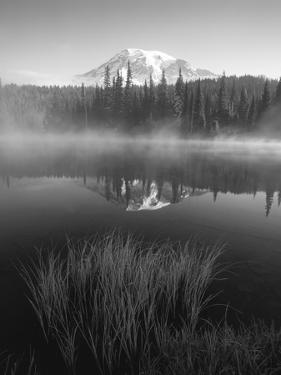 Grass Along Shore of Reflection Lake, Mount Rainier National Park, Washington, USA by Adam Jones