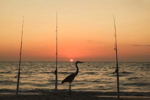 Great blue heron on beach, silhouetted between three fishing poles at sunset, Boca Grande, Florida. by Adam Jones