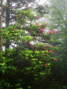 Great Smoky Mountains National Park, North Carolina, USA by Adam Jones