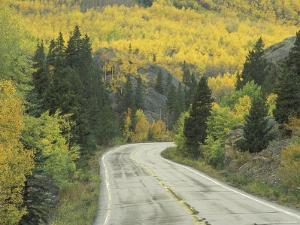 Highway 82 Through Autumn Aspen Trees, San Isabel National Forest, Colorado, USA by Adam Jones