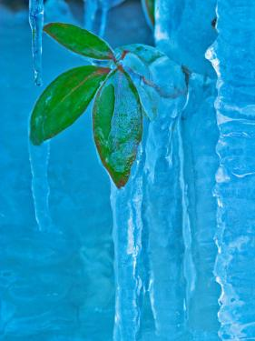 Icicle, Great Smoky Mountains National Park, Tennessee, USA by Adam Jones
