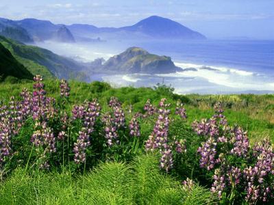 Lupine and Oregon Coastline, Oregon by Adam Jones