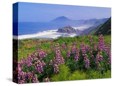 Lupine Flowers and Rugged Coastline along Southern Oregon, USA by Adam Jones
