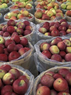 Macintosh Apples in Baskets, New York State, USA by Adam Jones