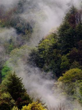 Mist Rising After Spring Rain in the Great Smoky Mountains National Park, Tennessee, USA by Adam Jones