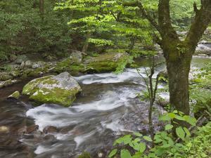 Mountain Stream, Great Smoky Mountains National Park, North Carolina, Usa by Adam Jones