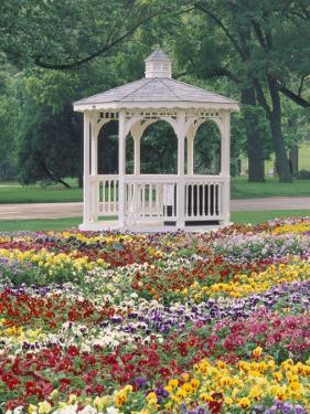 Patchwork of Pansies and Gazebo, Columbus, Ohio, USA by Adam Jones