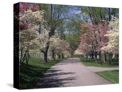 Pink and White Dogwood Trees in Bloom Along a Fenced Road, Lexington, Kentucky, USA by Adam Jones