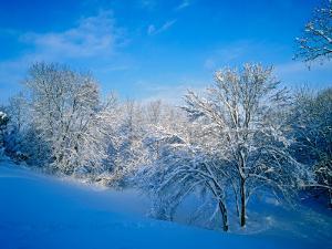 Record Snow in Louisville, Kentucky, USA by Adam Jones