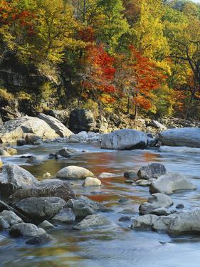 River Flowing Through Forest in Autumn, North Fork, Potomac State Forest, Maryland, USA by Adam Jones