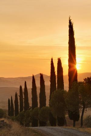 Road Lined with Cypress Trees at Sunrise, Tuscany by Adam Jones