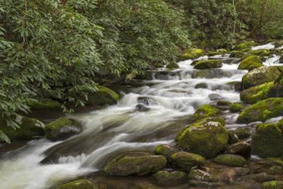 Roaring Fork river, Great Smoky Mountains National Park, Tennessee by Adam Jones