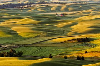 Rolling landscape of wheat fields and distant red barn viewed from Steptoe Butte, Palouse farming r by Adam Jones