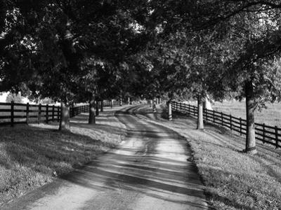 Row of Trees and Country Lane at Dawn, Bluegrass Region, Kentucky, USA by Adam Jones