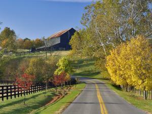 Rural Road Through Bluegrass in Autumn Near Lexington, Kentucky, USA by Adam Jones