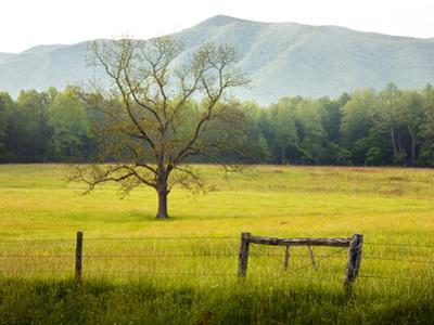 Single Tree at Sunrise, Cades Cove, Great Smoky Mountains National Park, Tennessee, Usa by Adam Jones