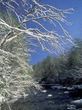 Snow-Covered Branches on Little River, Great Smoky Mountains National Park, Tennessee, USA by Adam Jones