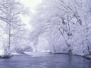 Snow Covered Branches Overhanging Beargrass Creek, Louisville, Kentucky, USA by Adam Jones