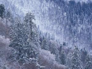 Snowy Trees on Mountain Slope, Morton Overlook, Great Smoky Mountains National Park, Tennessee, USA by Adam Jones