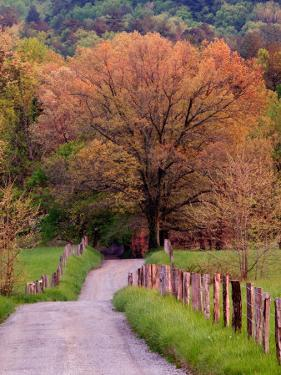 Sparks Lane, Cades Cove, Great Smoky Mountains National Park, Tennessee, USA by Adam Jones